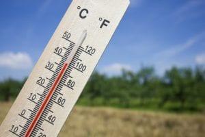 Warm, warm, te warm!